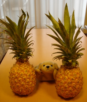 01_peach_pine_070701