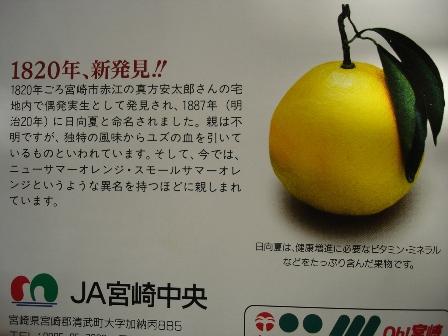 04_1820_sinhakkenn_hyuganatsu_070202_003