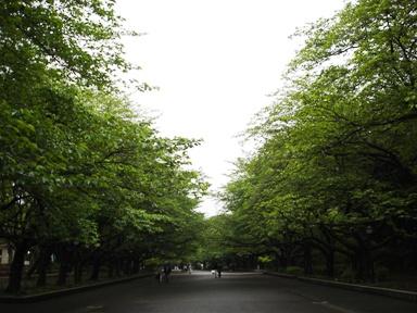 060427ueno_park_green_007