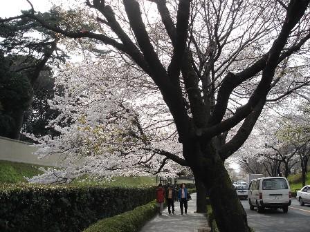 1_inuimon_kara_chidorigafuchi_060330_011