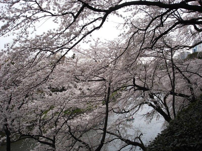 9_kitanomaru_kouen_ohori_karano_nagame_0