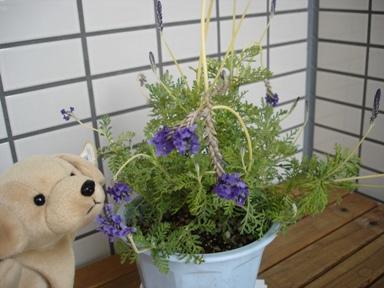060119_lavender_