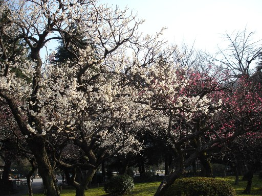 060305ume_gobuzaki_hibiya_park_no_027