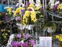 dsc01531_kamakura_rann